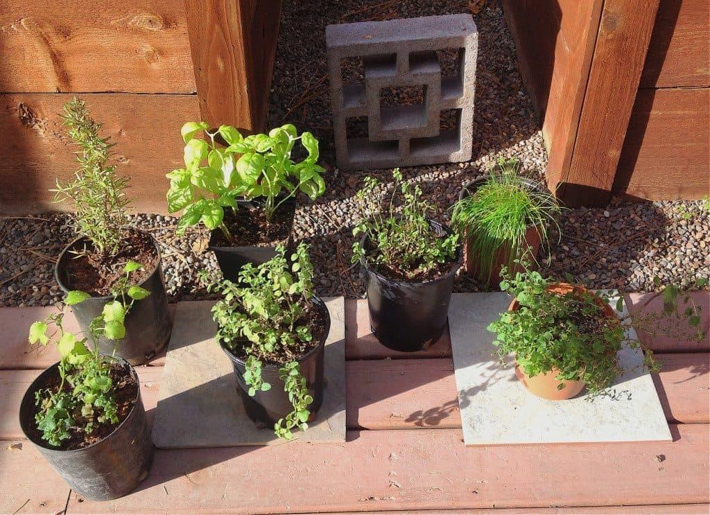 Herbs outside