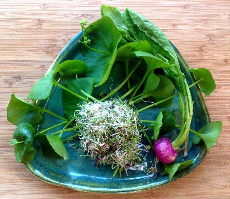 miner's lettuce salad