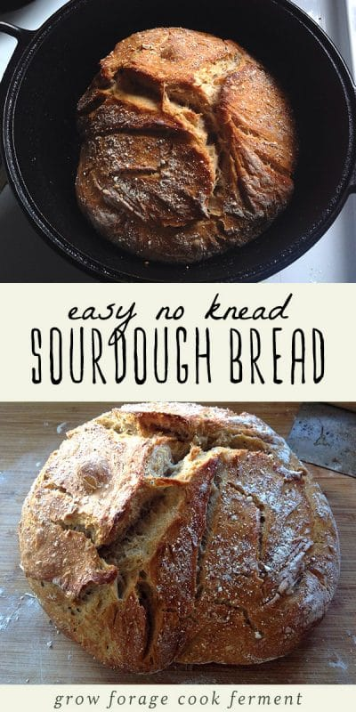 Freshly baked no knead sourdough bread in a dutch oven, and sourdough bread on a cutting board.