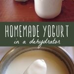 Homemade yogurt made in a dehydrator in jars and in a large mixing bowl.