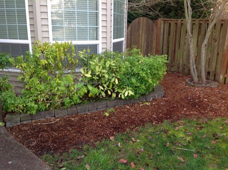 ditch the lawn