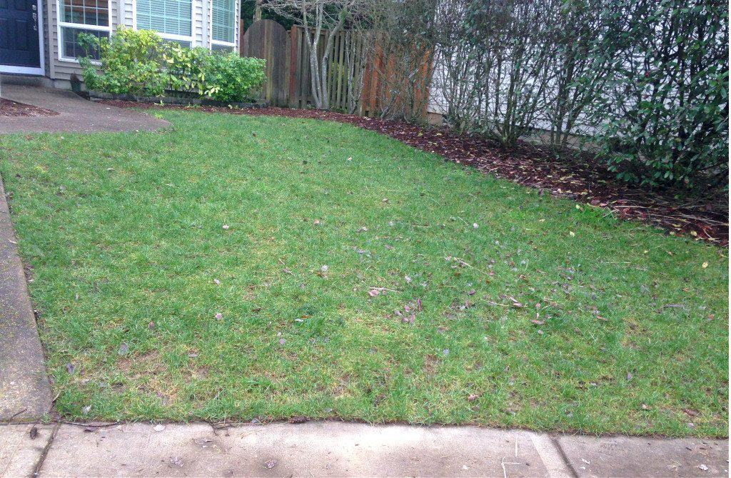 before shot lawn