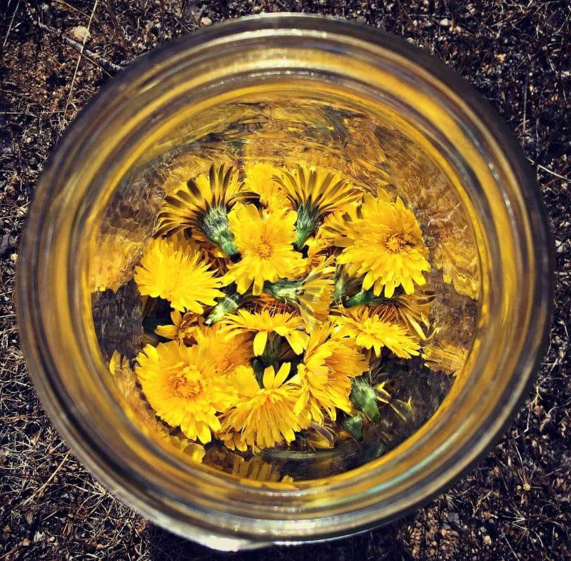 dandelion mead