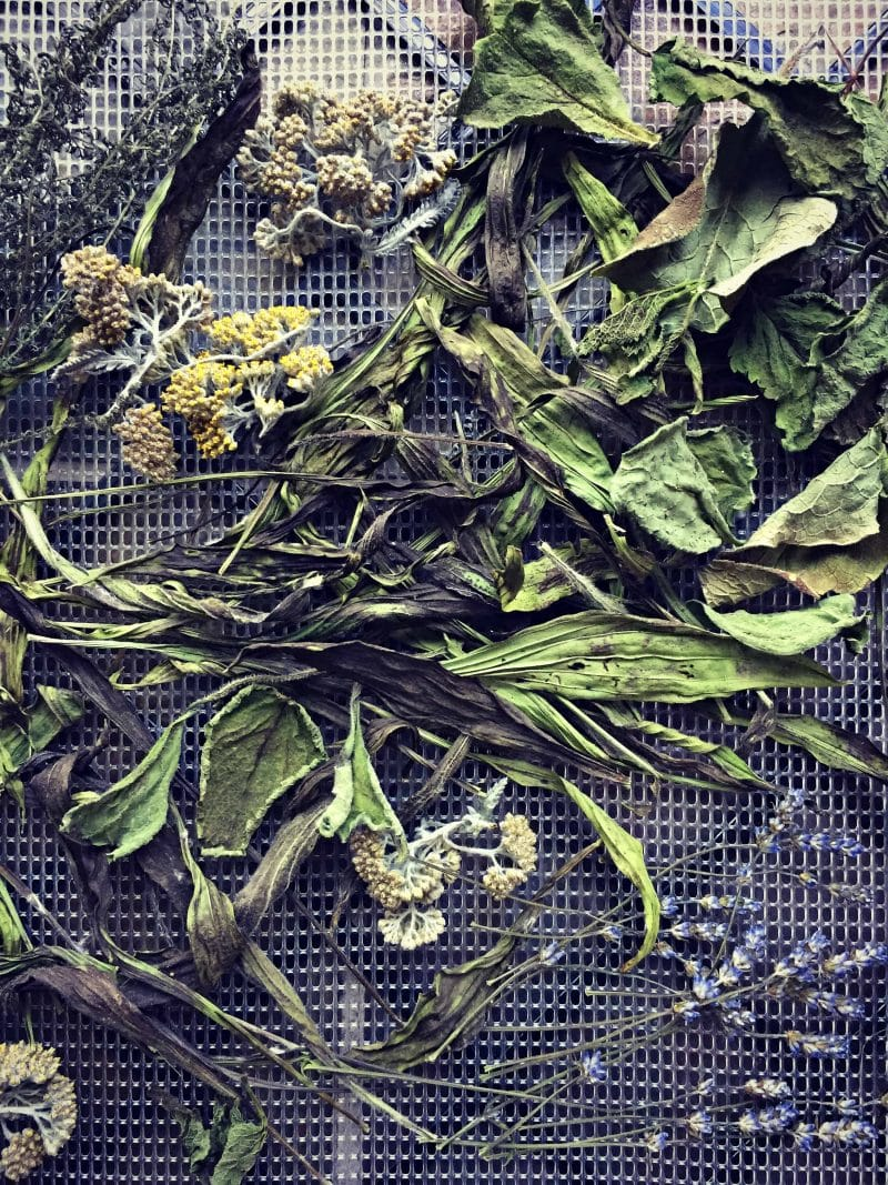 dried herbs on a screen