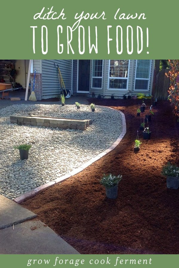 A permaculture lawn with gravel, edible plants, and potted plants.
