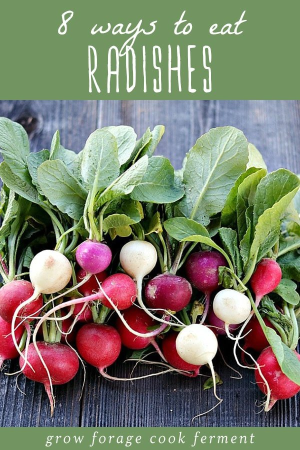 A large bunch of fresh radishes and radish greens