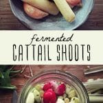 Fermented cattail shoots in a glass jar, and fermented cattails in a small bowl.