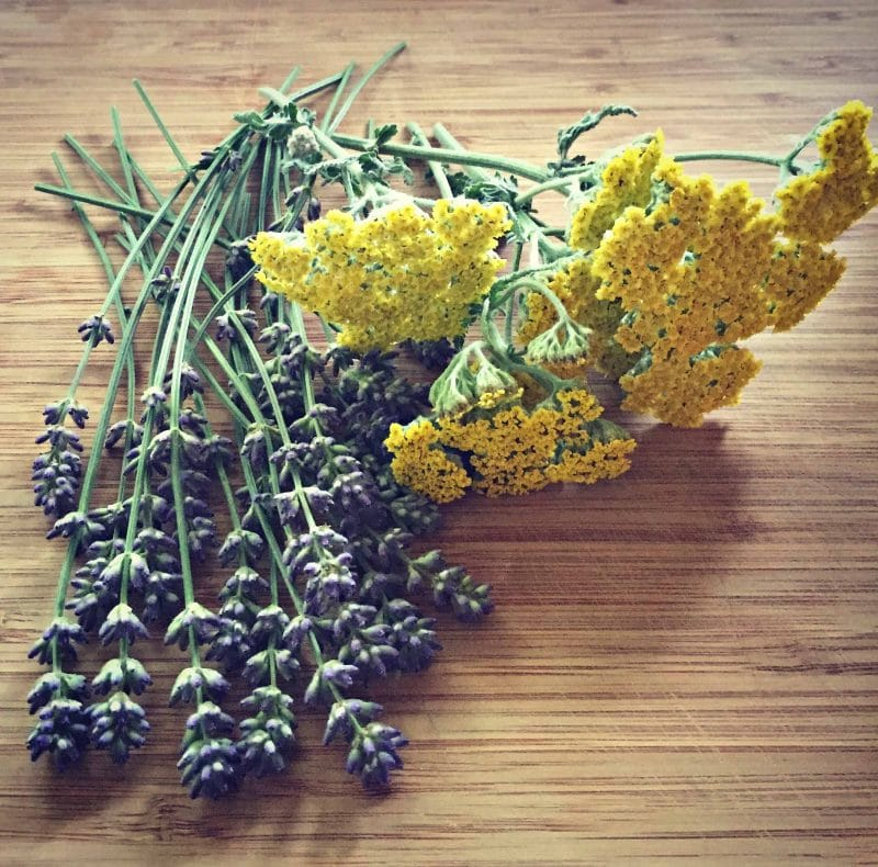 lavender and yarrow