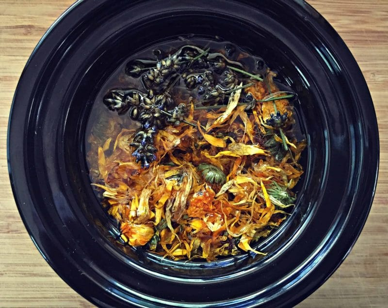 making calendula infused oil in a mini crockpot
