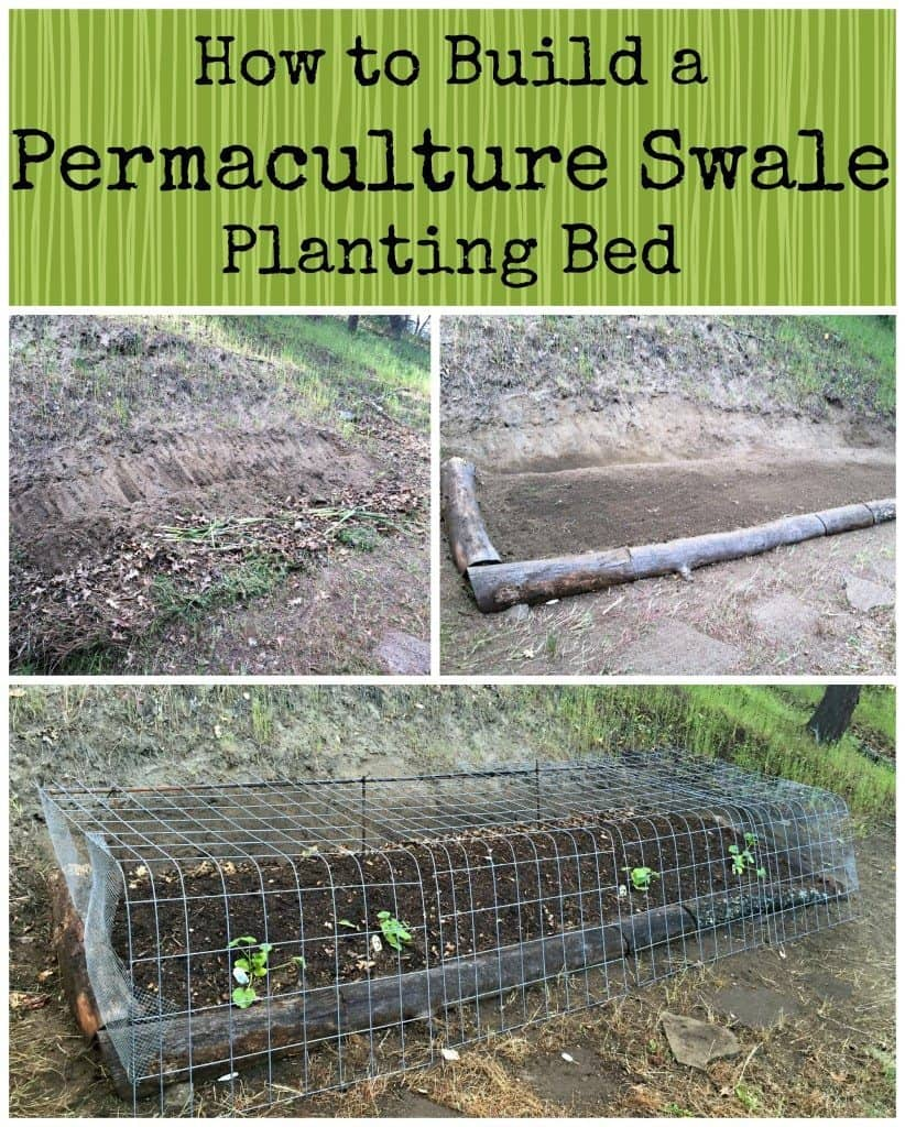 permaculture swale planting bed