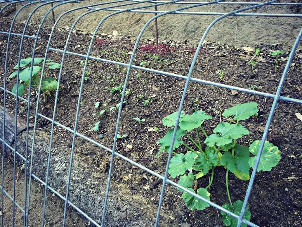 permaculture swale bed