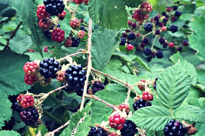 Updates and Recent Happenings: Waiting for Blackberries
