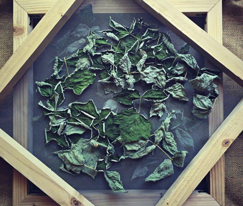 dried raspberry leaves