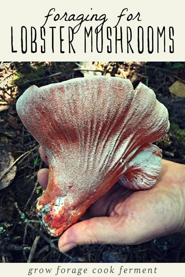 A woman holding a foraged lobster mushroom.
