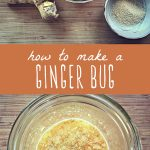 The ingredients for making a ginger bug, and a bubbling traditionally fermented ginger bug in a glass jar.