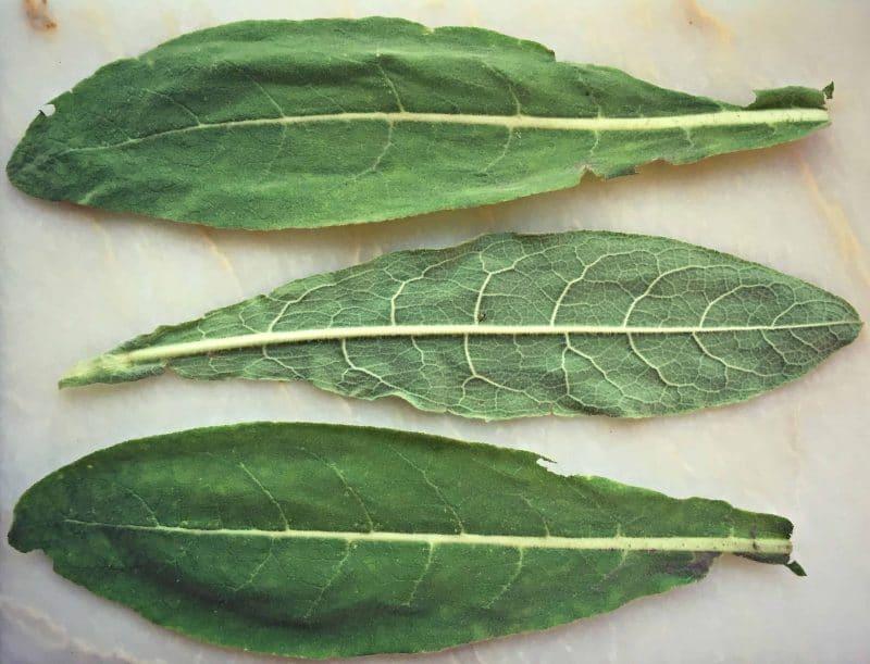 mullien leaves