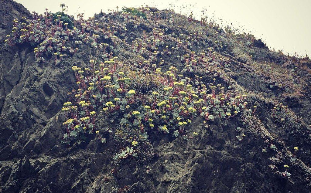 succulents on rock