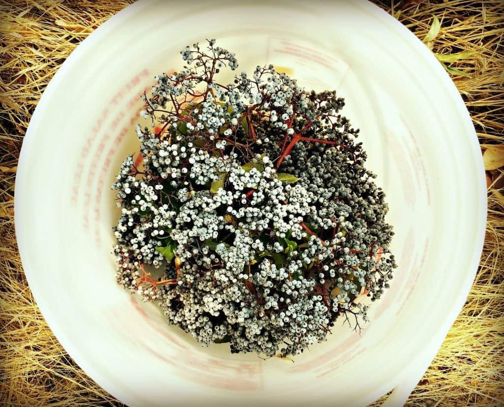 elderberry bucket