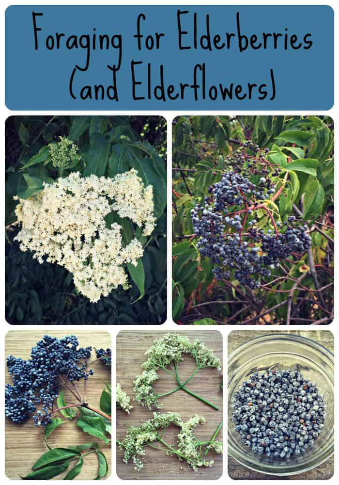 elderberry collage