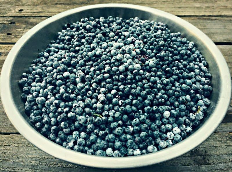 bowl of blue elderberries