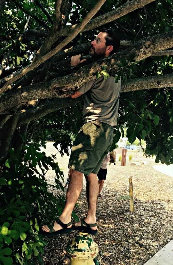 joel collecting figs