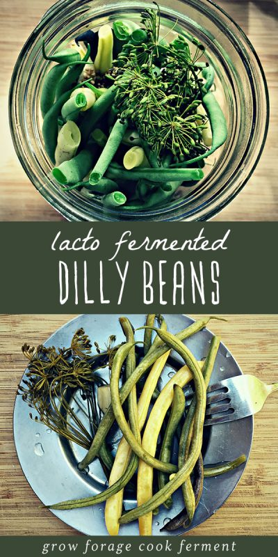 Lacto fermented dilly beans in a jar, and a serving of fermented green beans on a plate.