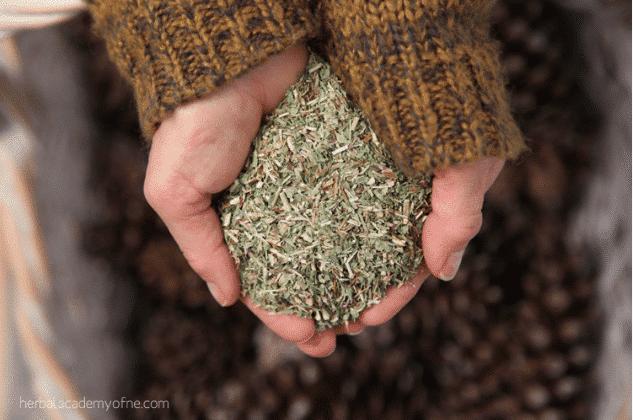 herbs in hands