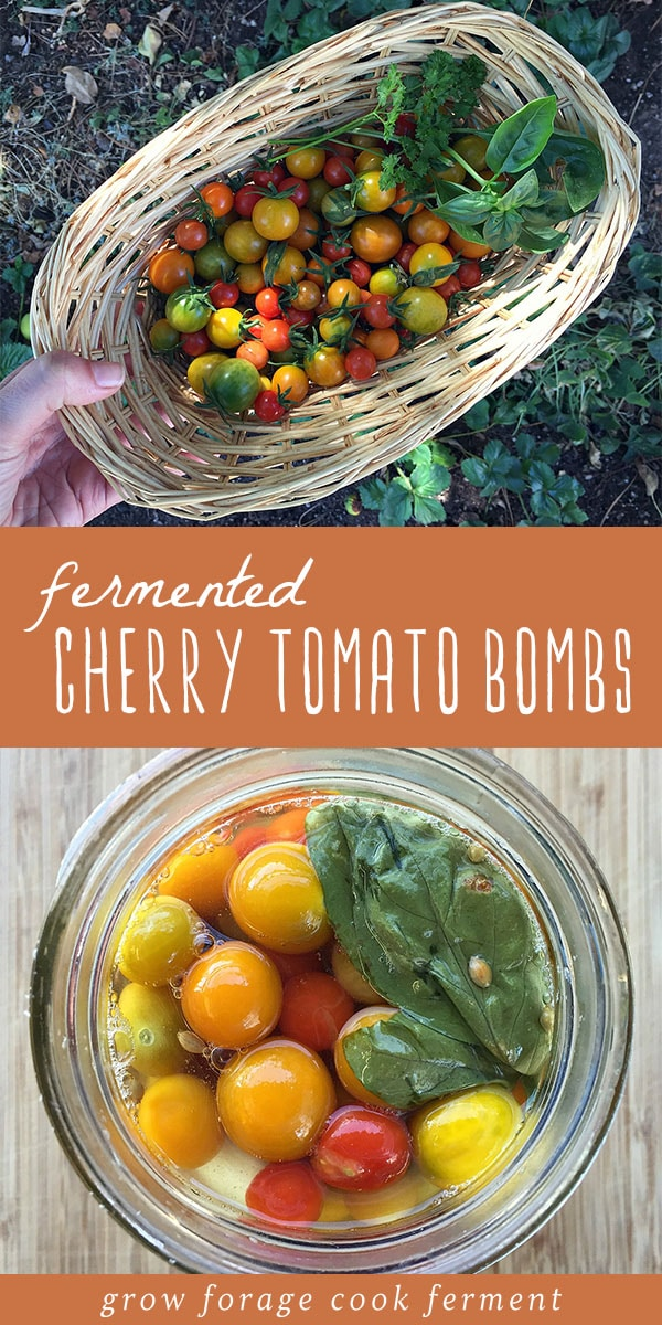 Fermented cherry tomato bombs are an excellent way to preserve an abundance of cherry tomatoes. The finished fermented tomatoes have a slight effervescence and amazing flavor. And since they keep in the fridge for 6 months, they're a great way to can and preserve the summer harvest well into winter. Yum! Click through for the recipe (and my best tips!) to make these healthy, delicious fermented cherry tomatoes! #ferment #fermented #summer #tomatoes #canning #foodstorage #realfood