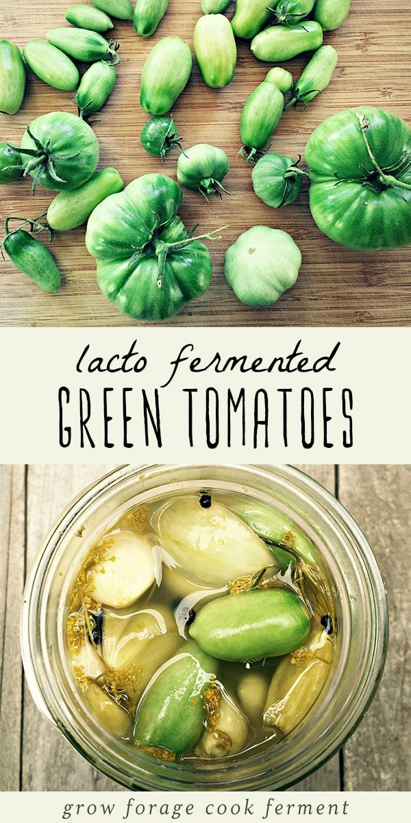 When you have an abundance of green tomatoes in your garden at the end of the growing season, make these lacto fermented green tomatoes to preserve the harvest. Fermented green tomatoes are a very easy beginning ferment recipe, tasty delicious, and are full of healthy gut healing probiotics. Simply perfect for preserving and canning the late summer harvest! #greentomatoes #ferment #fermented #lactofermentation #summer #canning #preserving #realfood #traditionalfoods