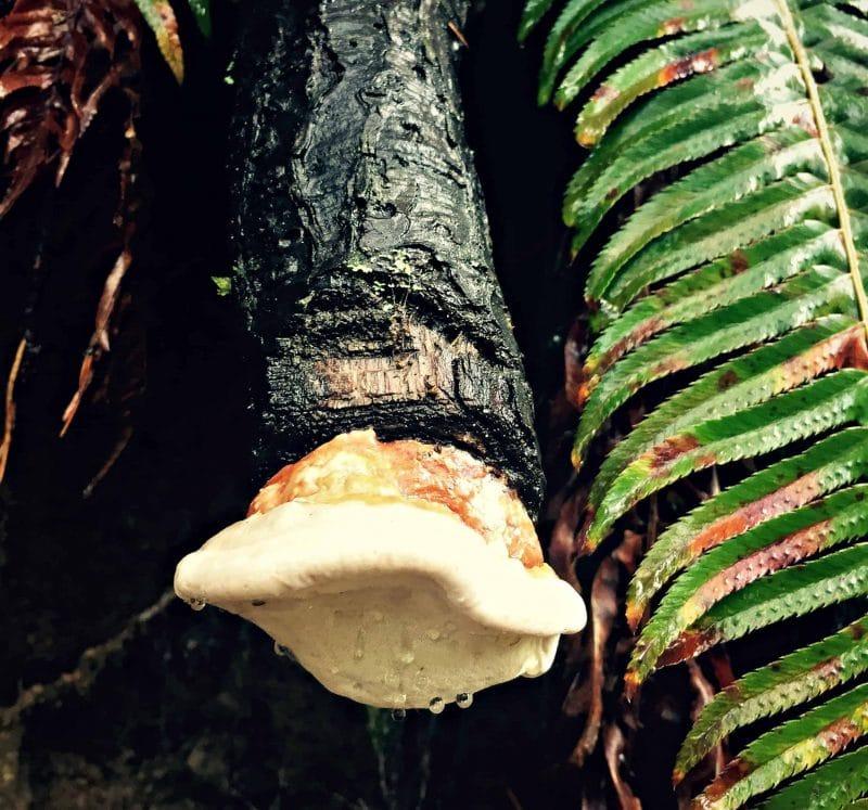 mushroom on end of log