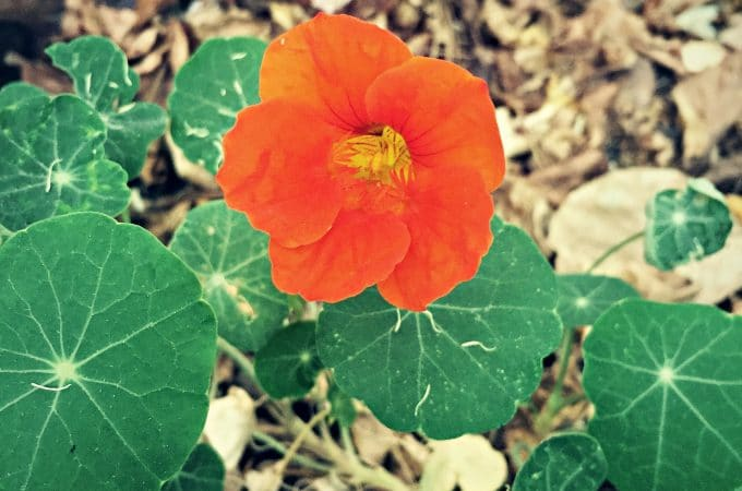 Updates and Recent Happenings: Fall Flowers and Zesty Salsa