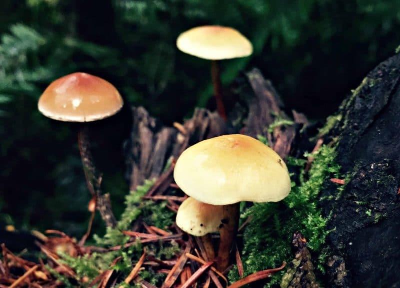 three little mushrooms