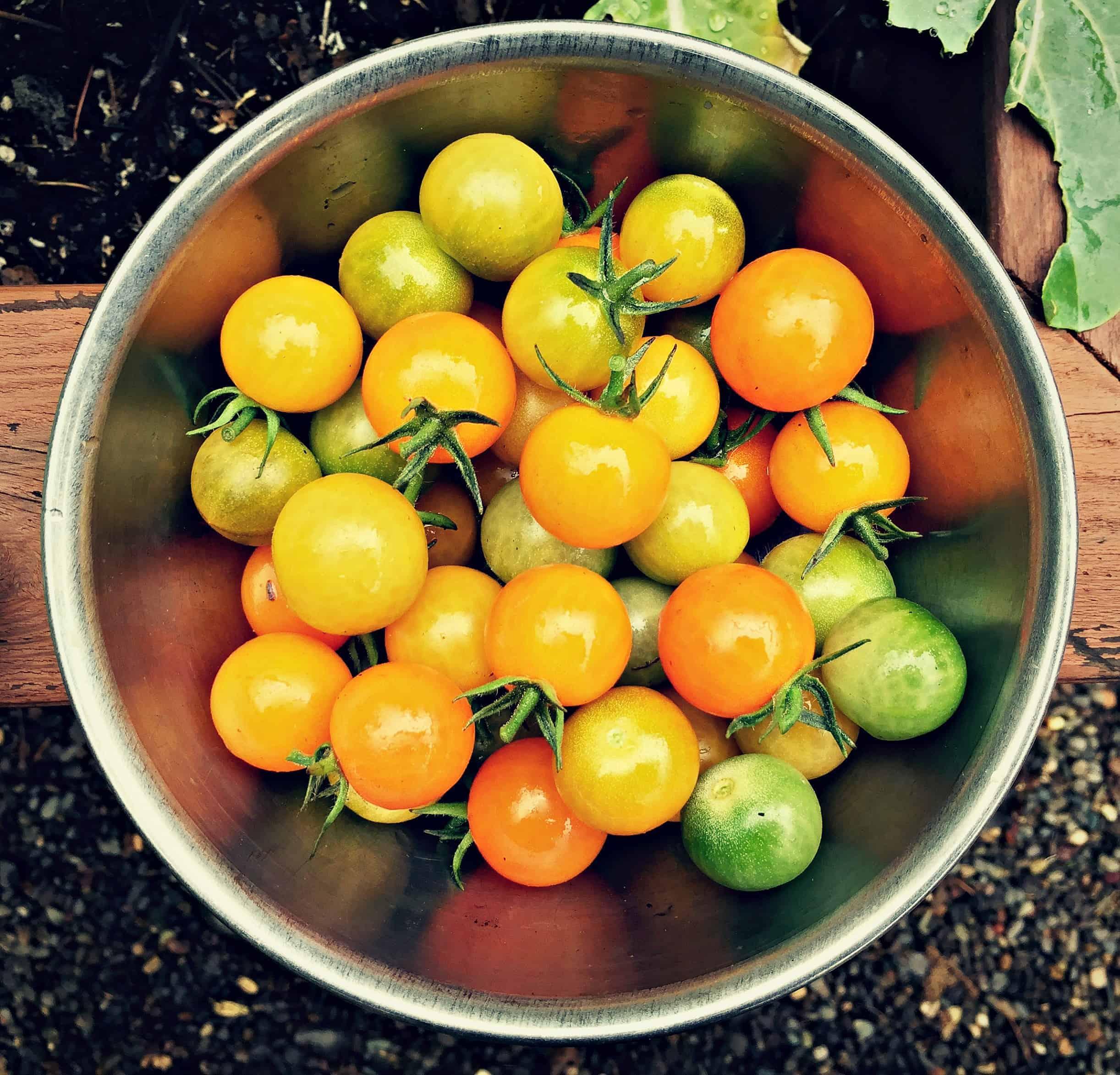 updates and recent happenings last harvests and winter garden prep