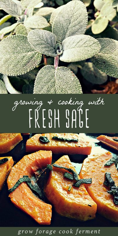 Fresh sage growing in a pot, and winter squash roasted with sage.