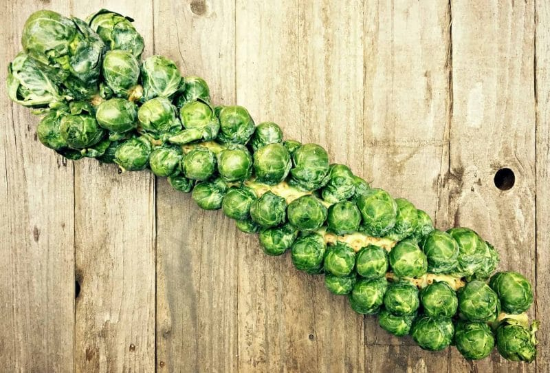 whole brussels sprout stalk
