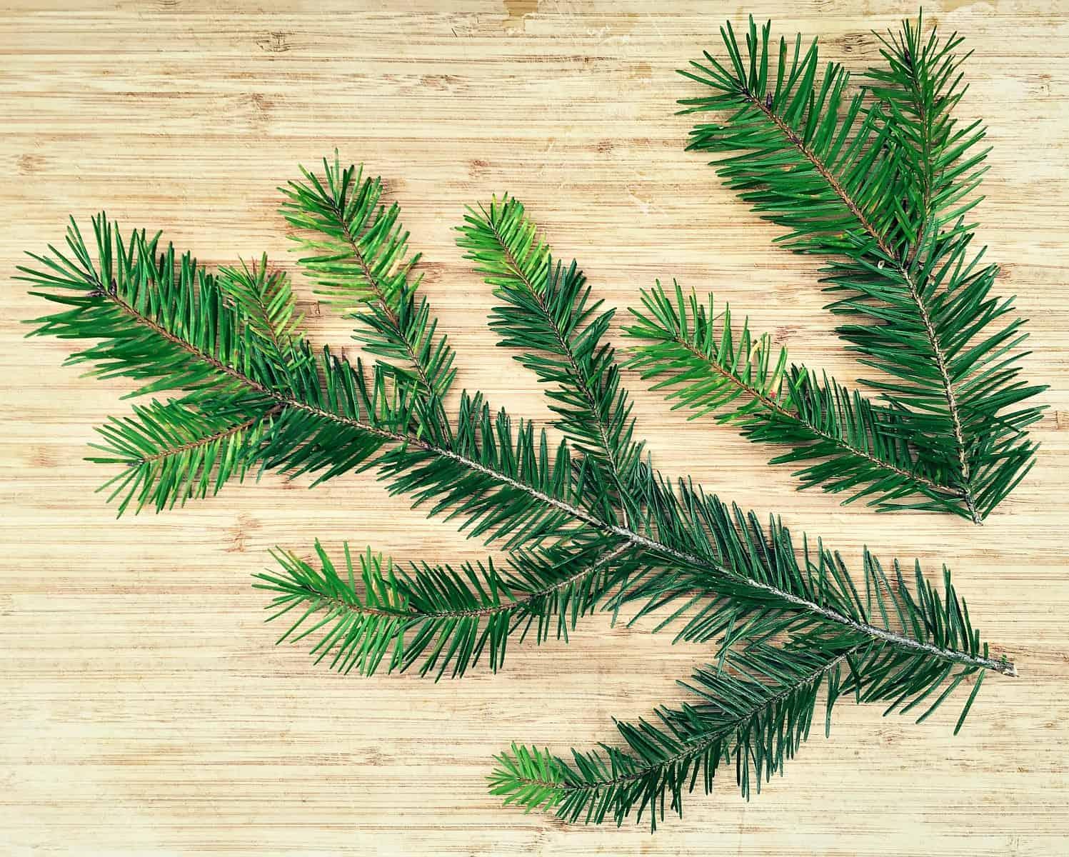 douglas fir needles branch