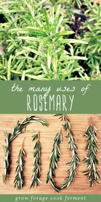 Rosemary growing in a garden, and sprigs of fresh rosemary on a wood cutting board.