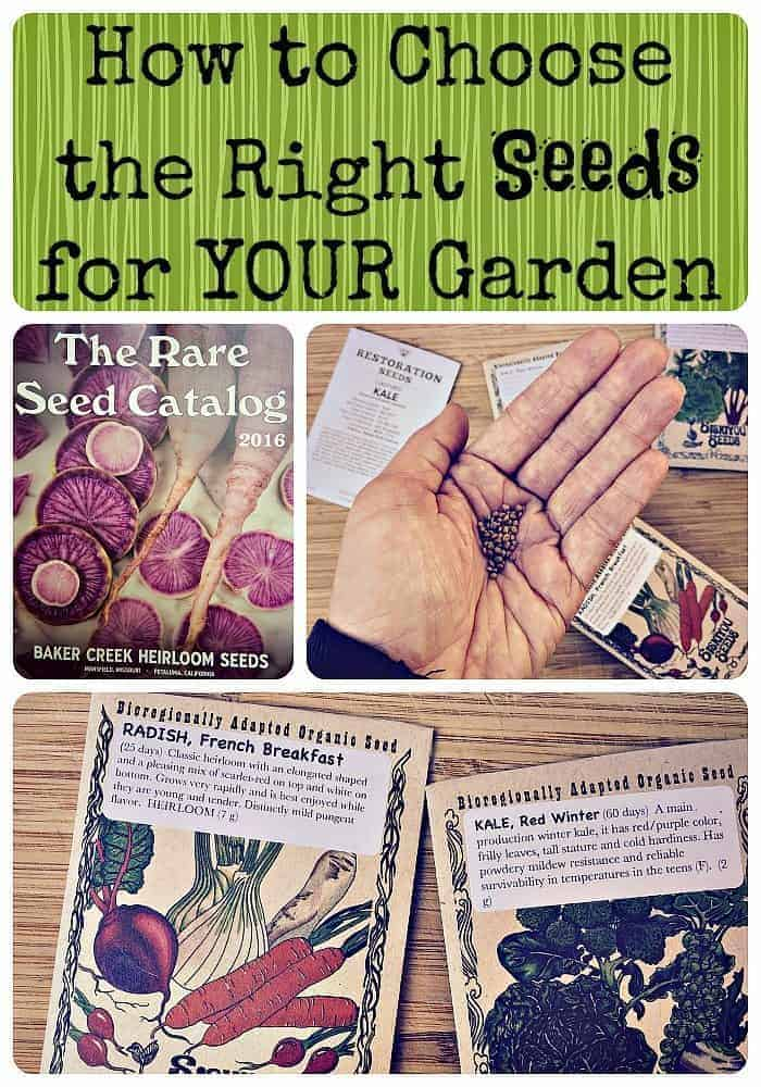 How to Choose the Right Seeds for YOUR Garden