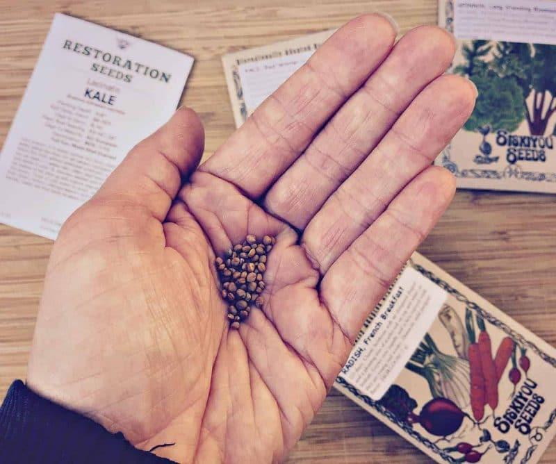 radish seeds in hand
