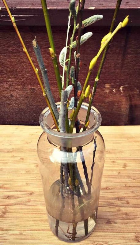 willow branches in vase
