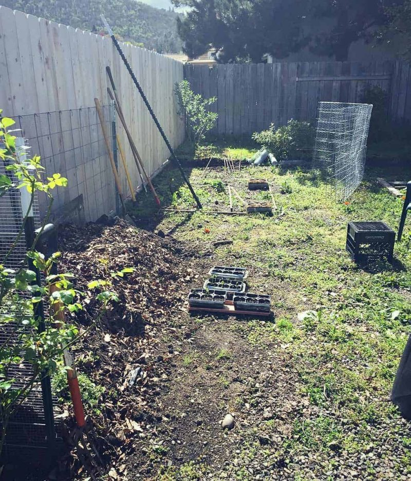 compost and chicken run