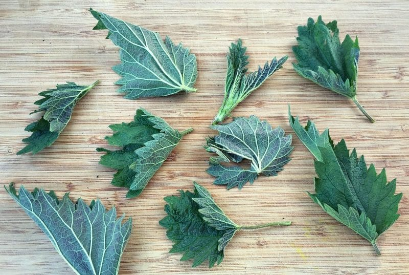 nettle leaves on a wooden board