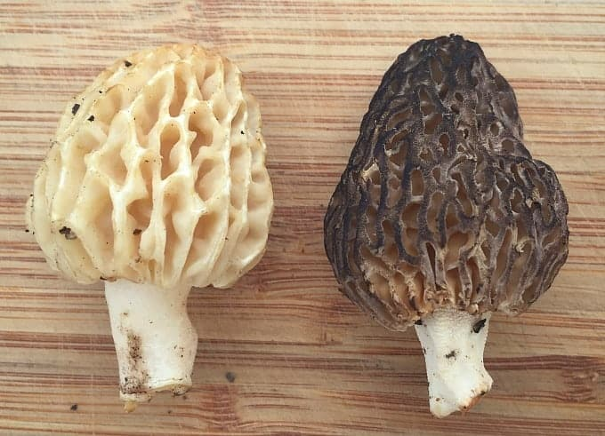 blonde and black morels
