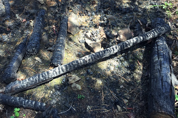 burned areas morels