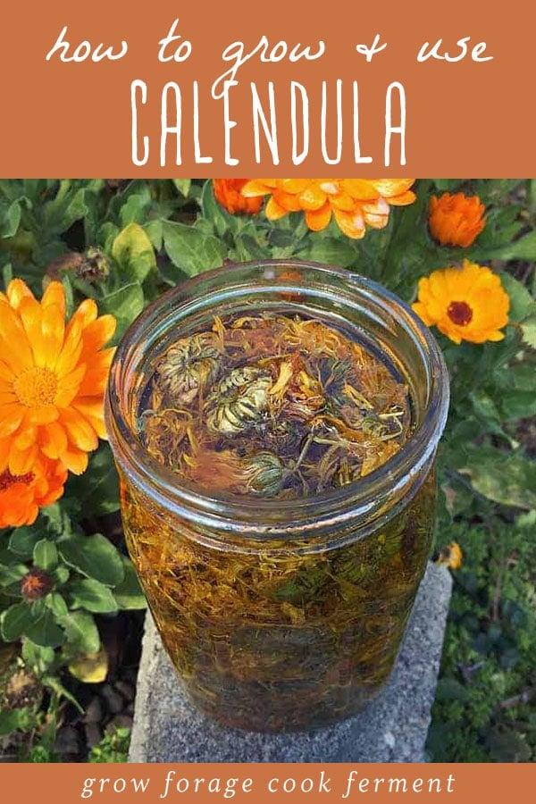 Calendula infused oil in a jar.