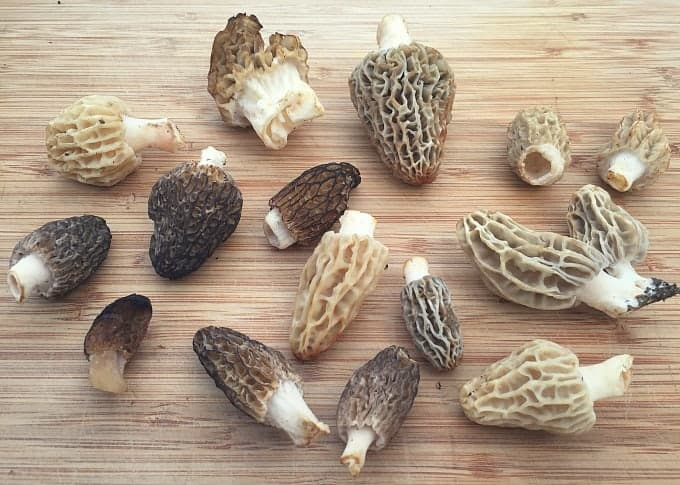 many kinds of morels