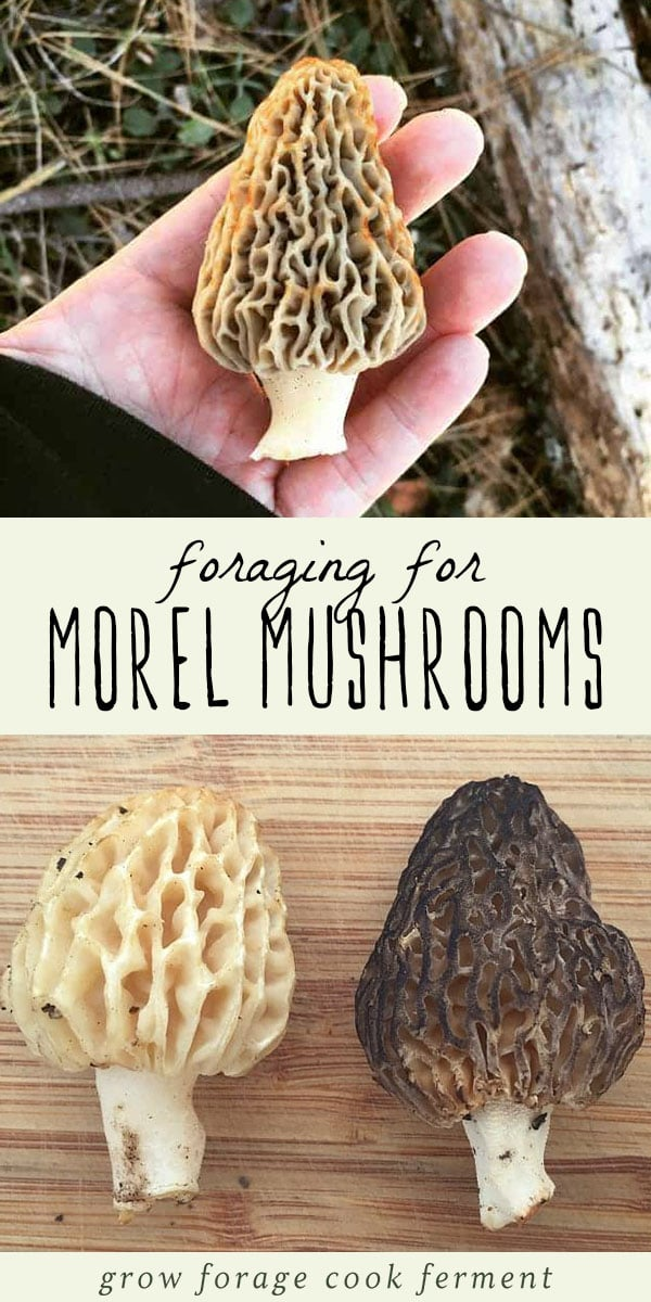 A woman holding a foraged morel mushroom, and foraged morel mushrooms on a cutting board.