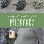 An array of useful herbs during pregnancy, and a pregnant woman holding a mug of herbal tea.