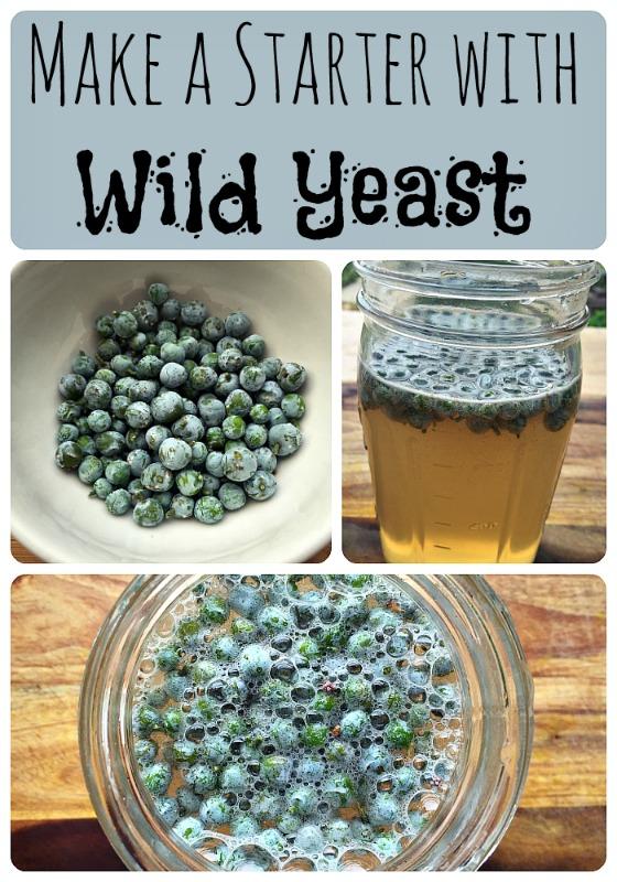 Make a Wild Yeast Starter
