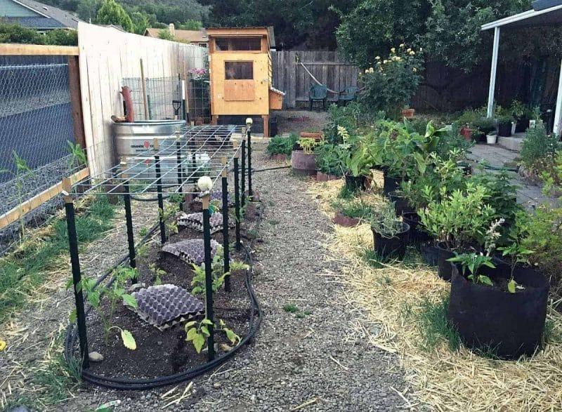 Backyard Garden Update